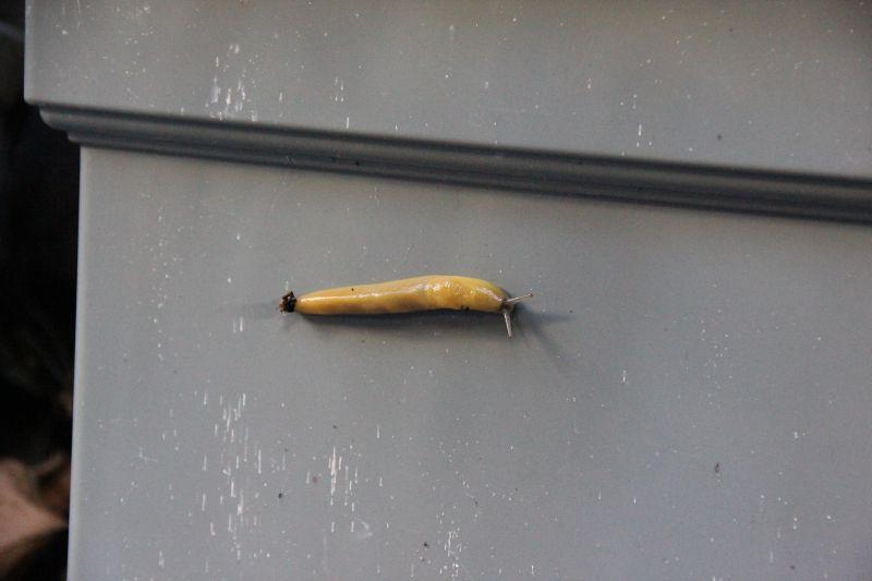 Random Slug