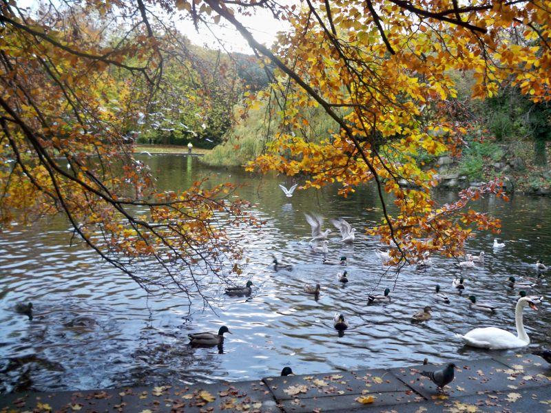 Autumn Lake - St Stephen's Green