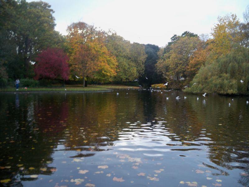 Lake at St Stephen's Green